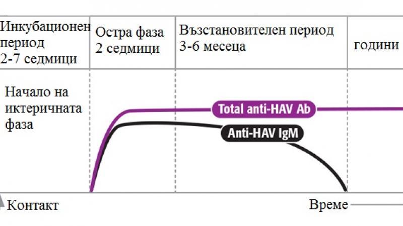 Кога трябва да си направим серологично изследване за Хепатит А?